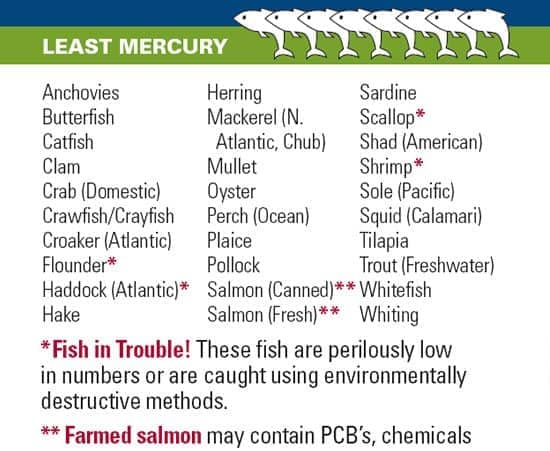 Fish and mercury what you need to know for Healthiest fish list