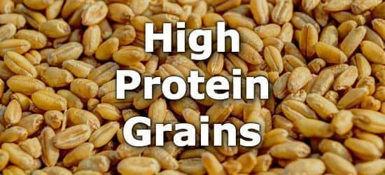 Grains with the Highest Protein to Carbohydrate Ratio